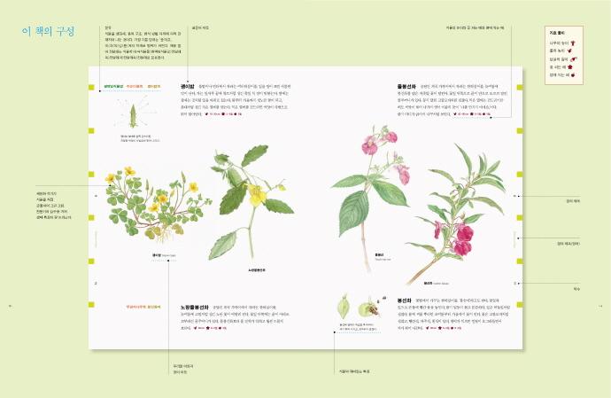 웅진 세밀화 식물도감(양장본 HardCover) 도서 상세이미지