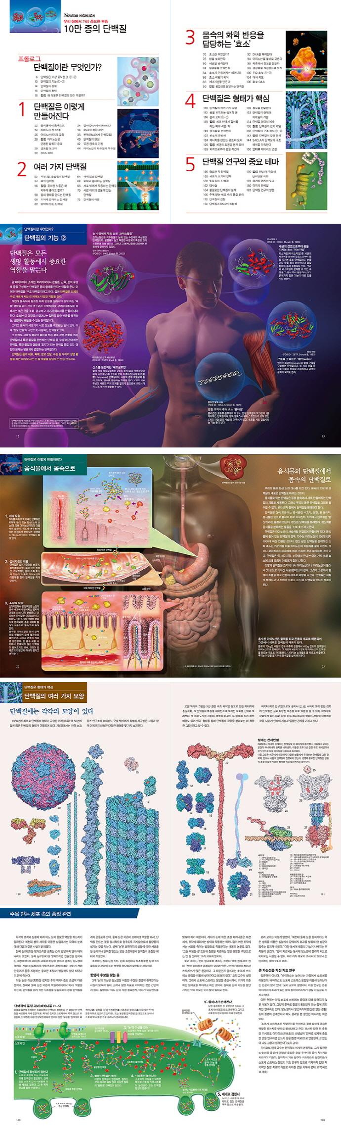 10만 종의 단백질(우리 몸에서 가장 중요한 부품)(Newton Highlight 107) 도서 상세이미지