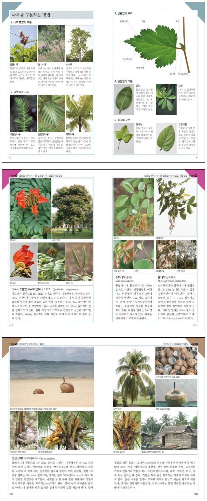 열대나무 쉽게 찾기(호주머니 속의 자연 8) 도서 상세이미지