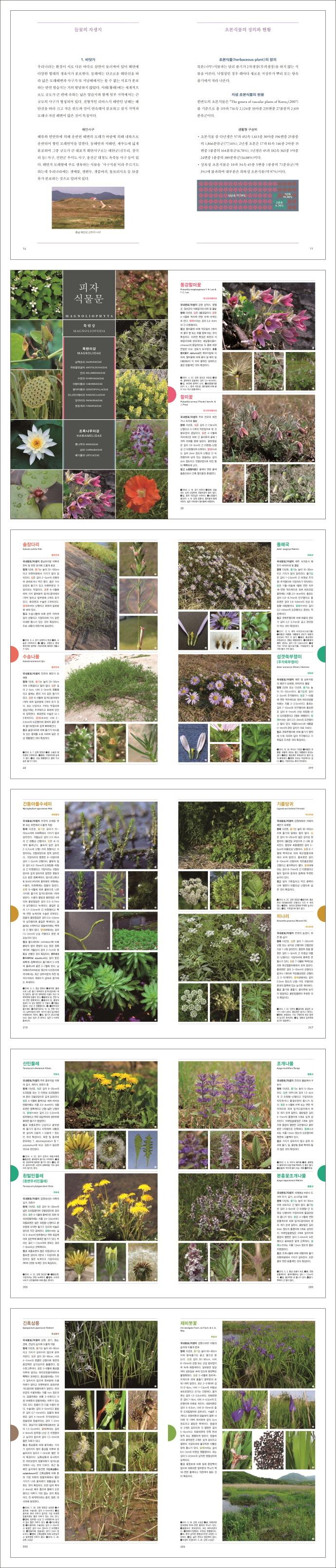 한국의 들꽃(반양장) 도서 상세이미지