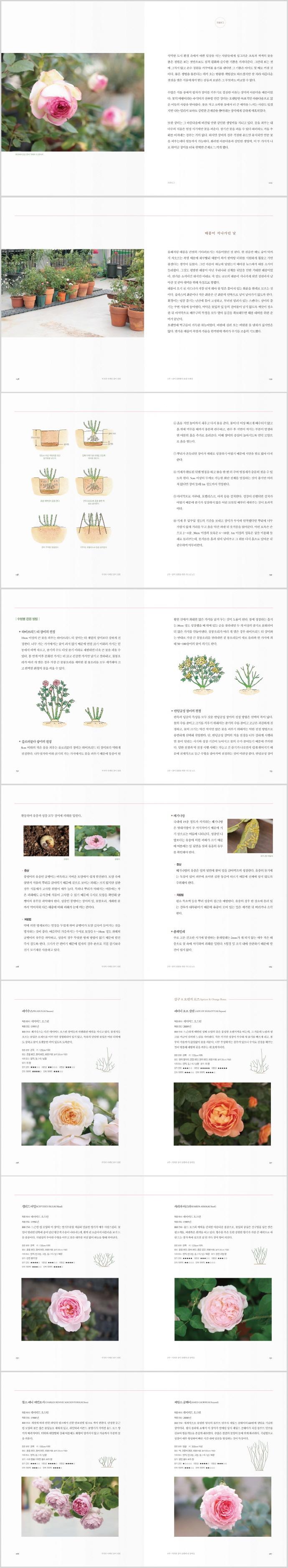 치치의 사계절 장미 정원 도서 상세이미지