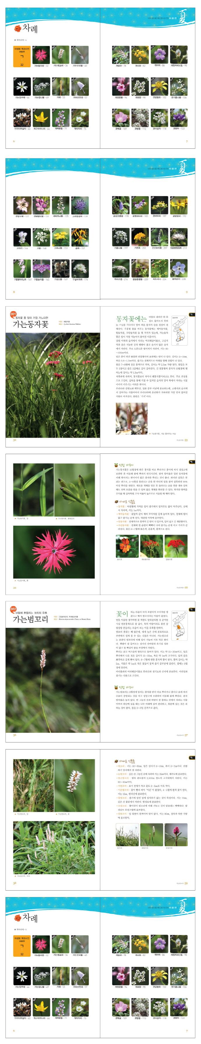 야생화 백과사전: 여름편 도서 상세이미지