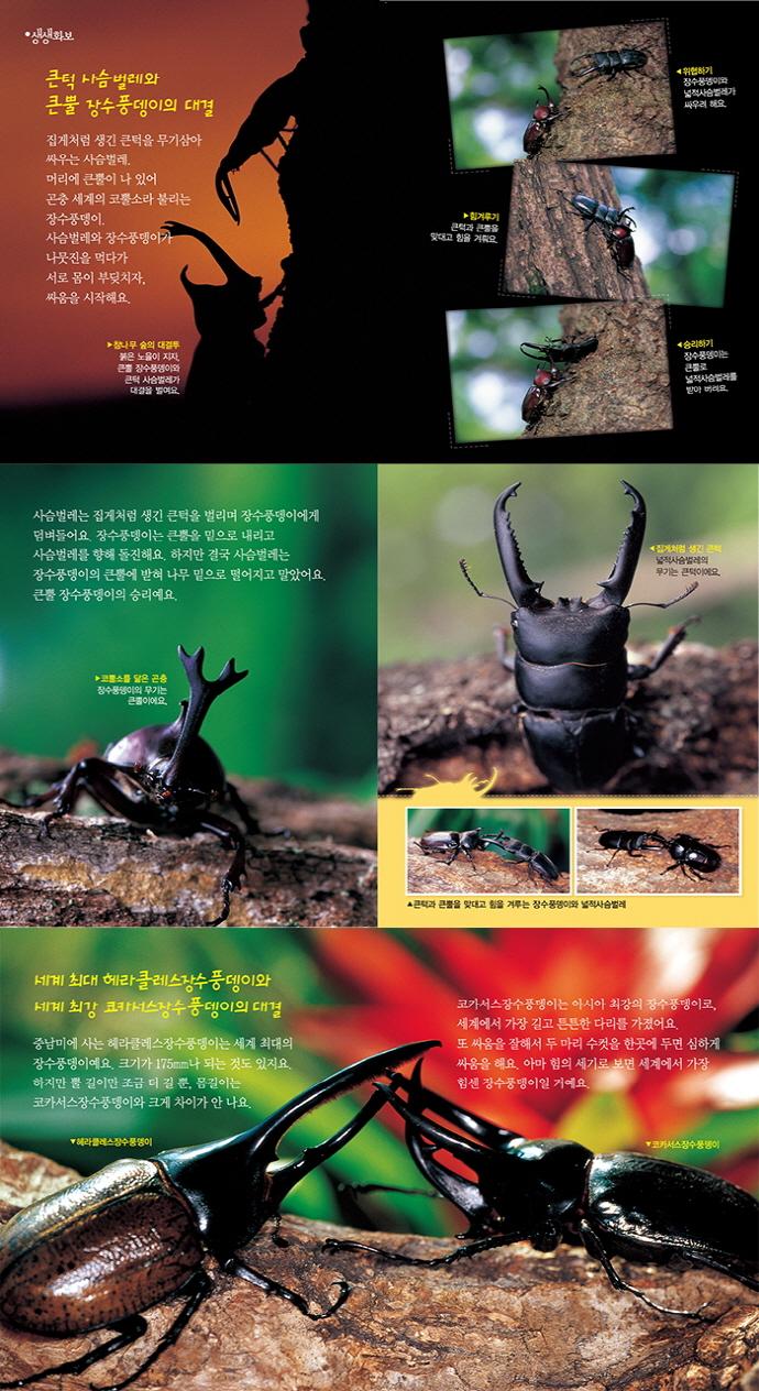 장수풍뎅이 사슴벌레 백과(신기한)(어린이 과학백과 10)(양장본 HardCover) 도서 상세이미지
