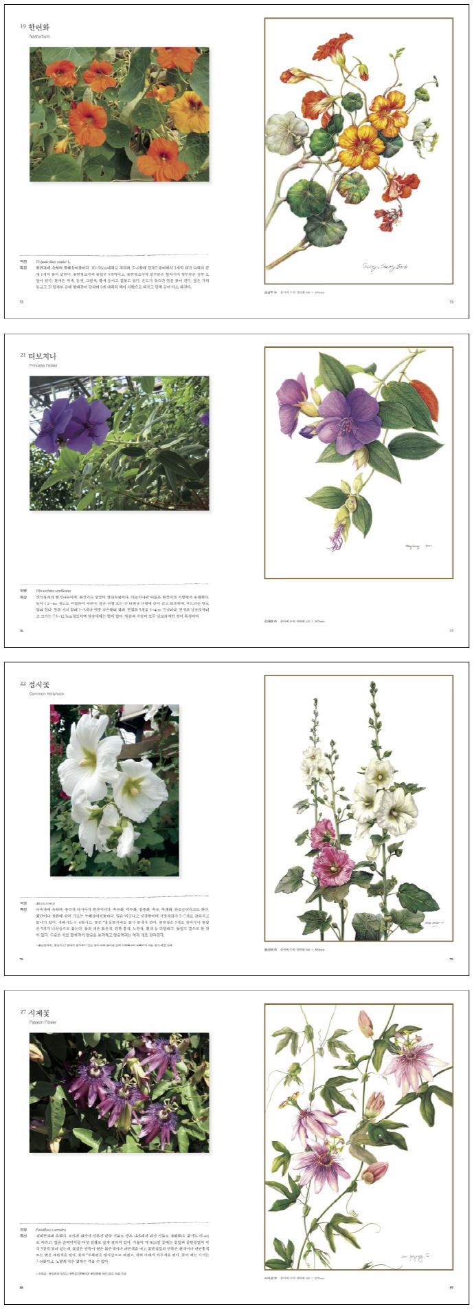 보타니컬 아트. 2: 수채 색연필 중급편(꽃그림 작품으로 배우는) 도서 상세이미지