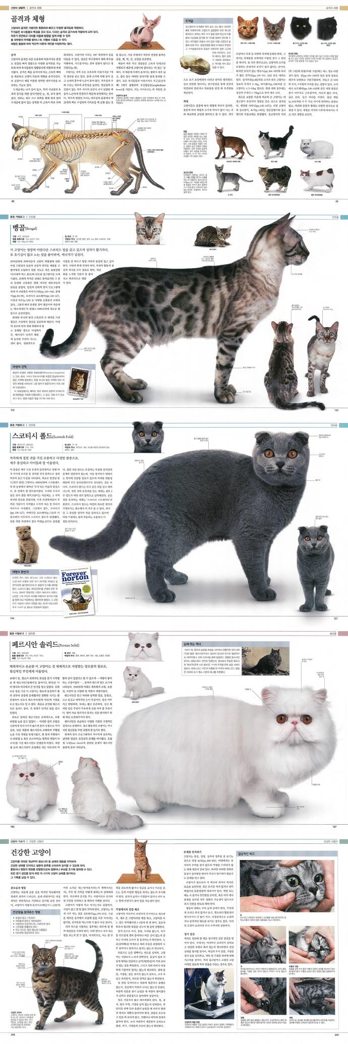 DK 고양이 백과사전(양장본 HardCover) 도서 상세이미지