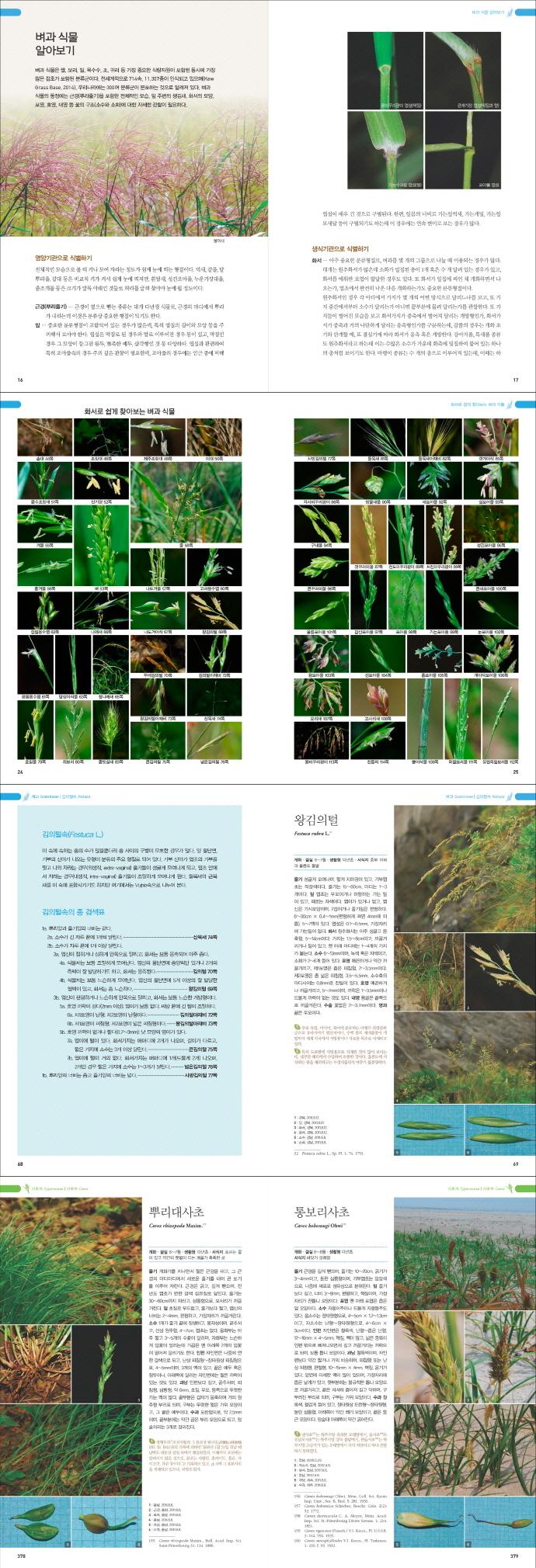 벼과 사초과 생태도감(한반도 생물 생태 탐구 4) 도서 상세이미지