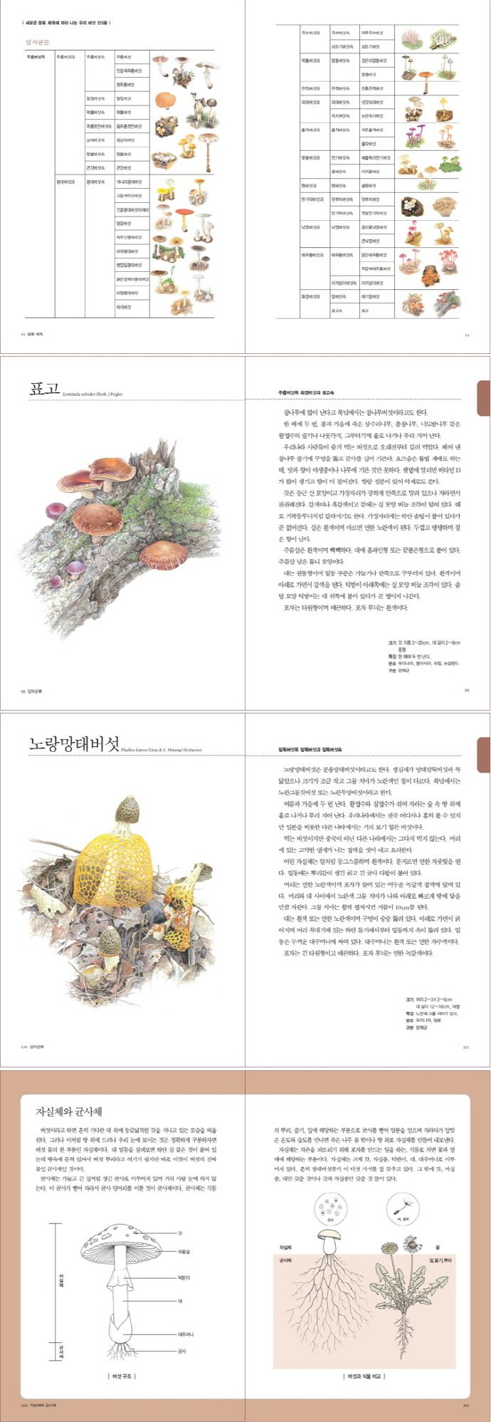 버섯 도감(보급판)(세밀화로 그린 보리 어린이) 도서 상세이미지