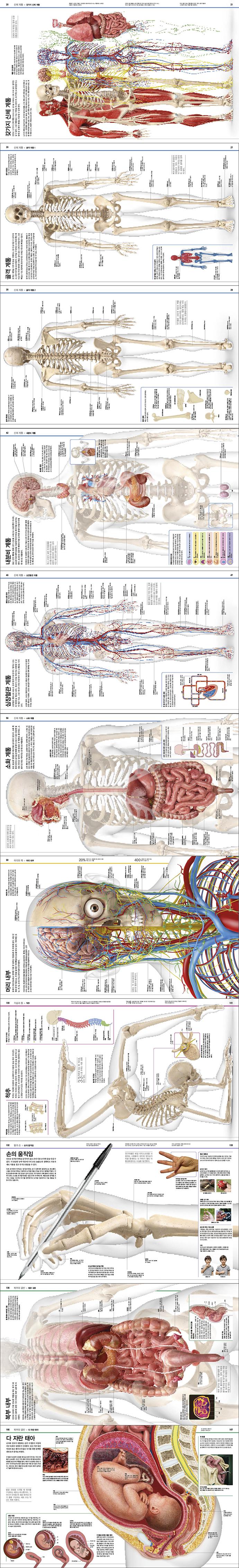 지식의 백과사전: 인체 도서 상세이미지