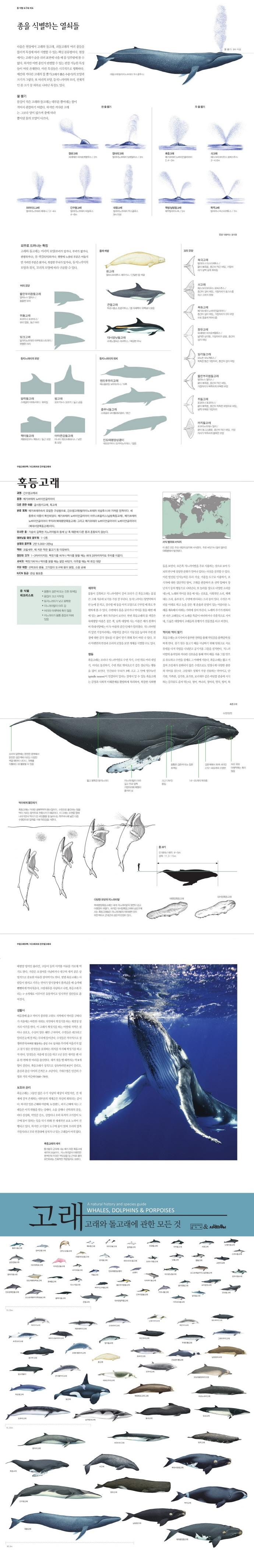 고래(양장본 HardCover) 도서 상세이미지