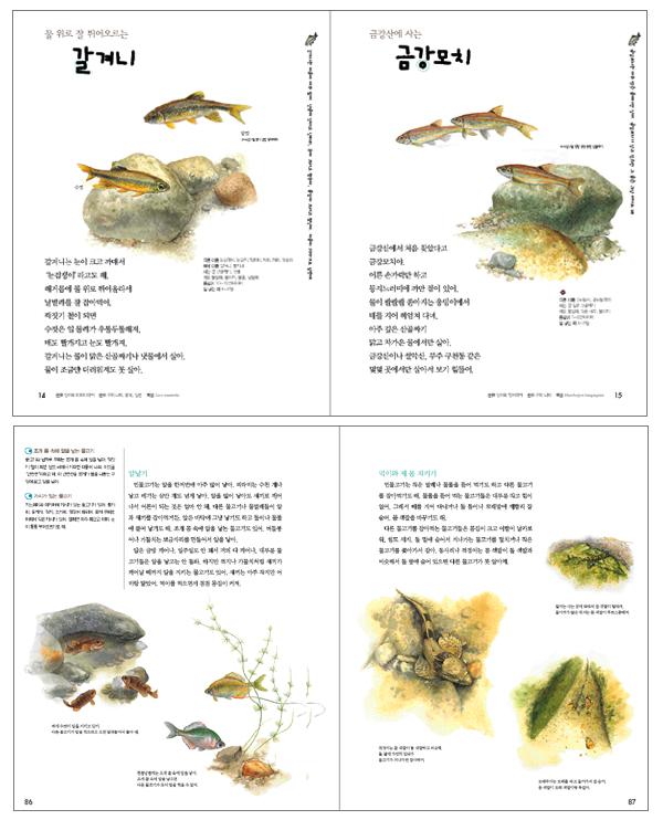 민물고기(보리 어린이 첫 도감 3)(양장본 HardCover) 도서 상세이미지