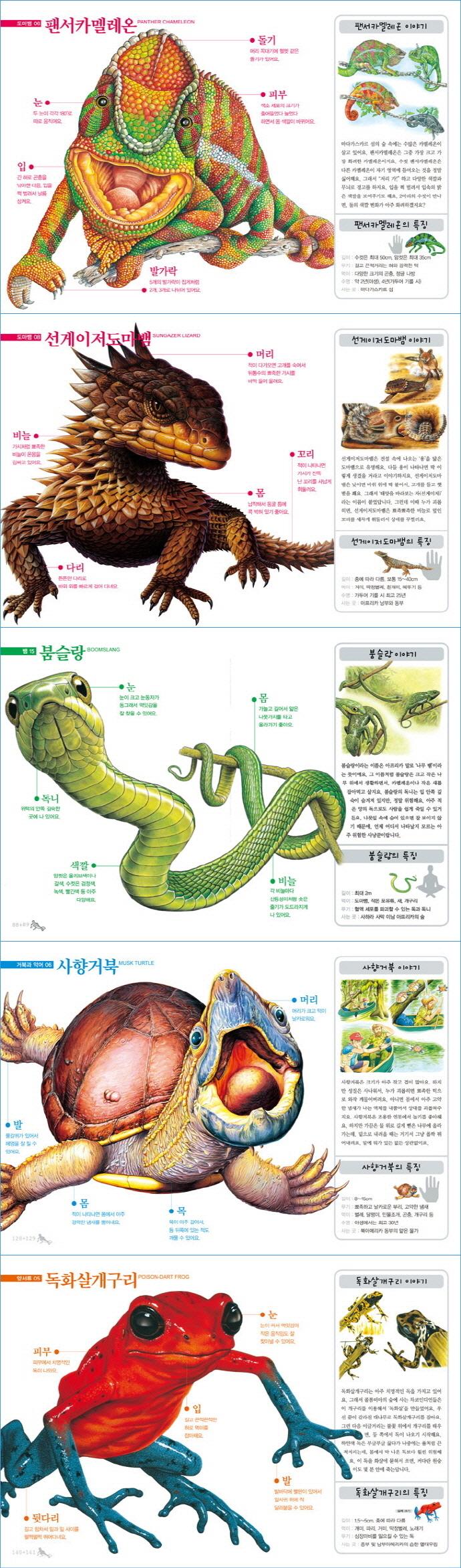 파충류 그림책(진짜 진짜 재밌는)(양장본 HardCover) 도서 상세이미지