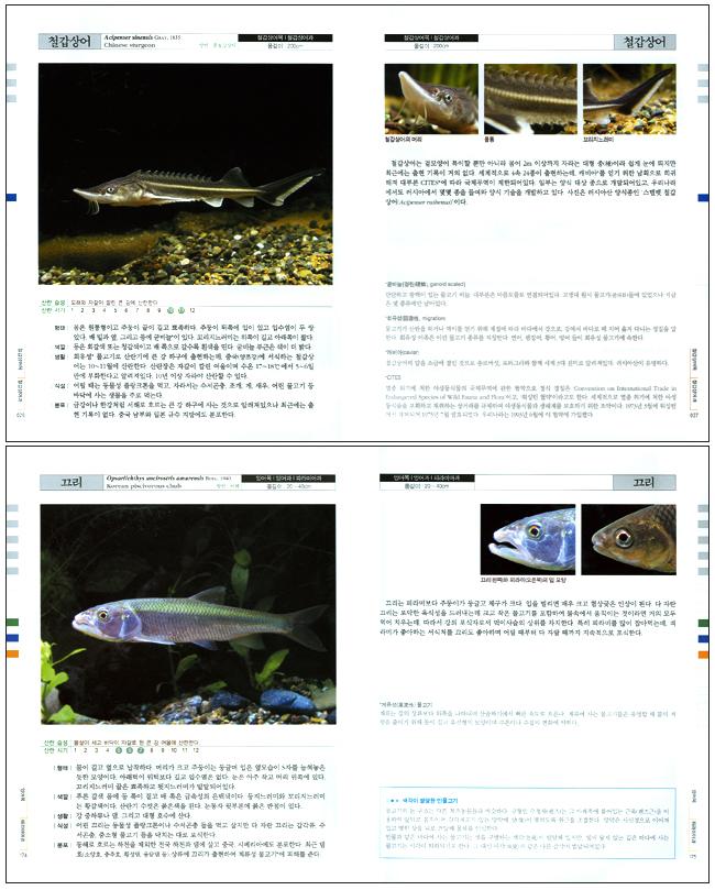 특징으로 보는 한반도 민물고기(원색도감)(개정판) 도서 상세이미지