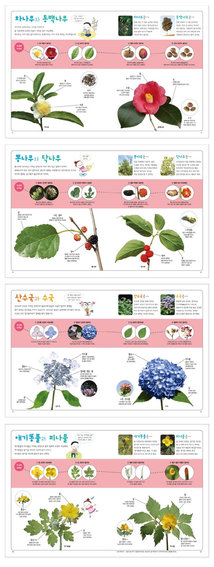 어린이 식물 비교 도감(어린이 자연 비교 도감) 도서 상세이미지