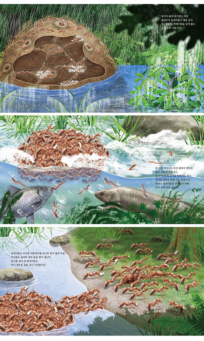 개미에게 배우는 나눔: 개미와 식물(최재천 교수의 어린이 개미 이야기 14)(양장본 HardCover) 도서 상세이미지