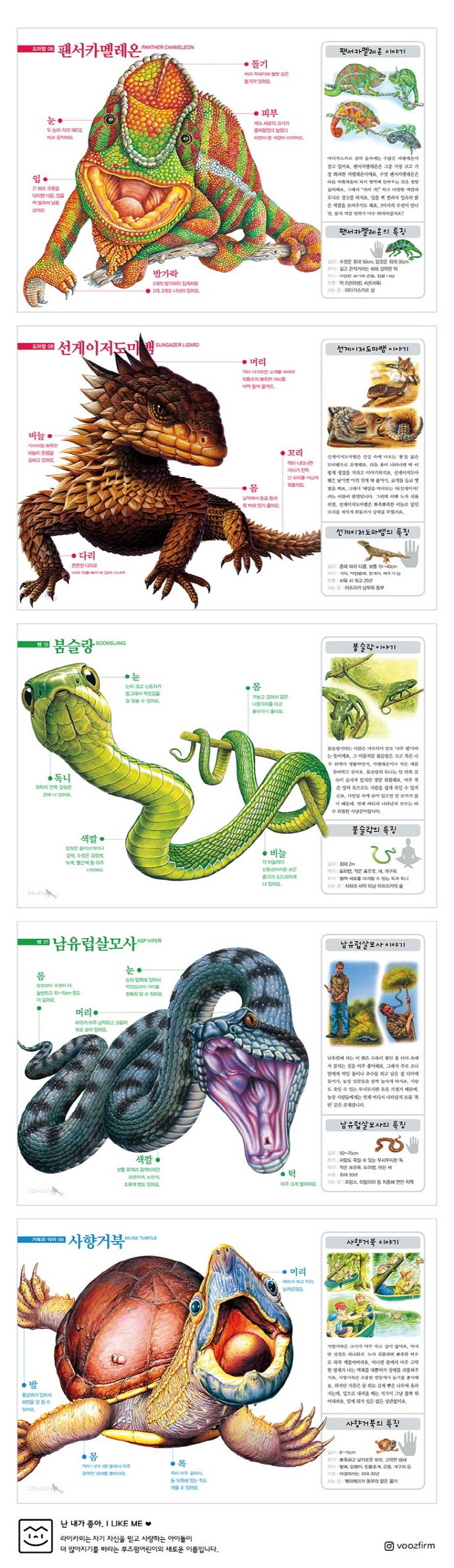 진짜 진짜 재밌는 파충류 그림책(양장본 HardCover) 도서 상세이미지