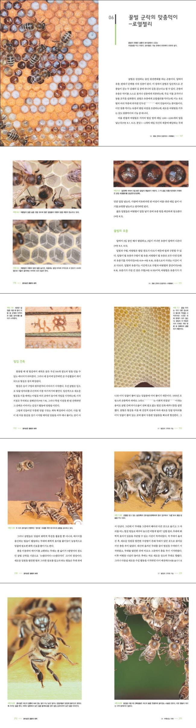 경이로운 꿀벌의 세계: 초개체 생태학(양장본 HardCover) 도서 상세이미지