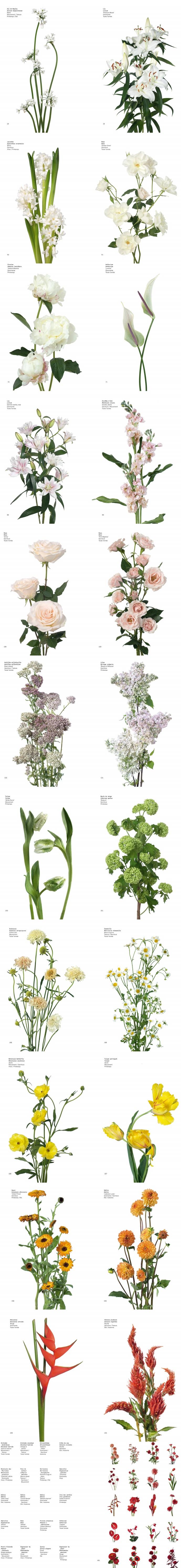 Guide Des Fleurs Par Couleurs (Flower Color Guide French) 도서 상세이미지