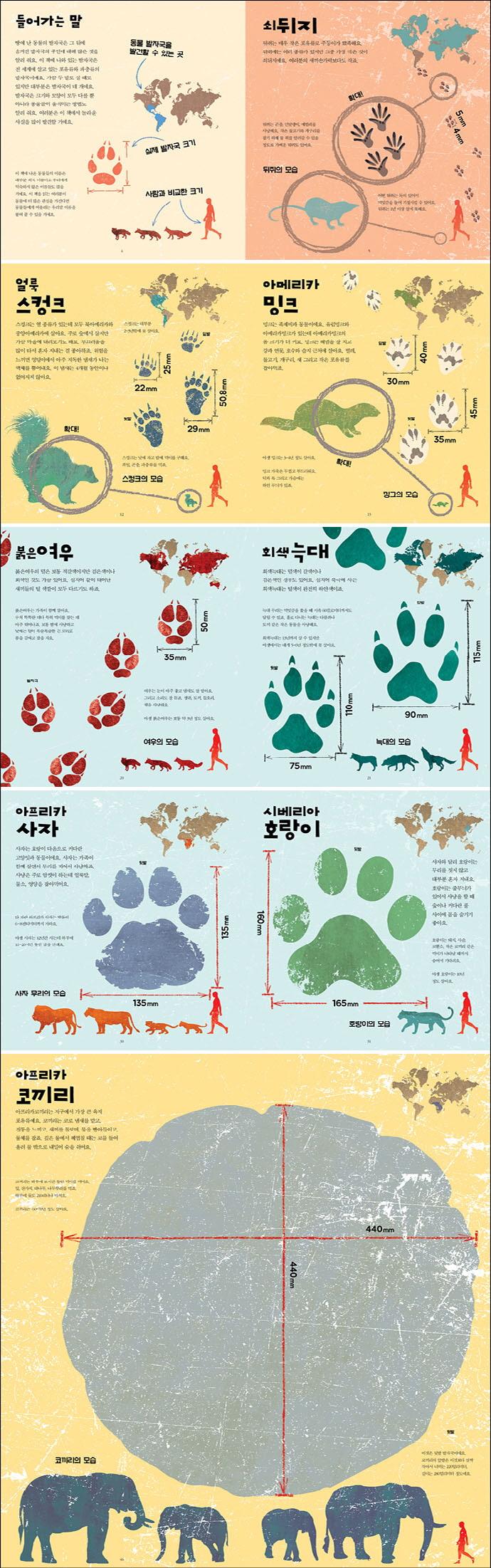 사자 대 호랑이 누구 발자국이 더 클까?(양장본 HardCover) 도서 상세이미지