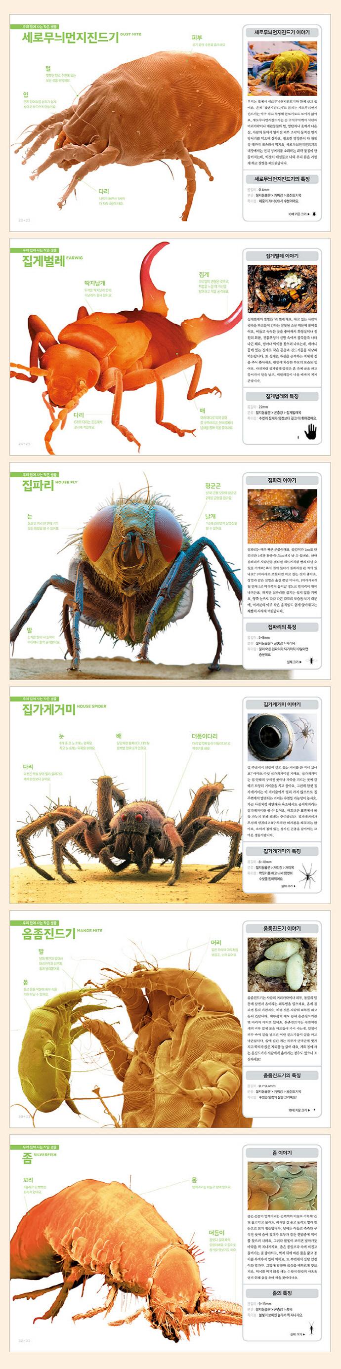 진짜 진짜 재밌는 작은 생물 그림책(그림으로 배우는 신기한 지식백과)(양장본 HardCover) 도서 상세이미지