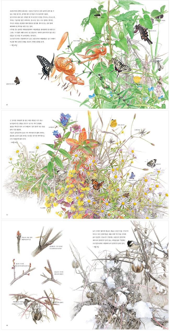 세밀화로 보는 꽃과 나비(권혁도 세밀화 그림책 3)(양장본 HardCover) 도서 상세이미지