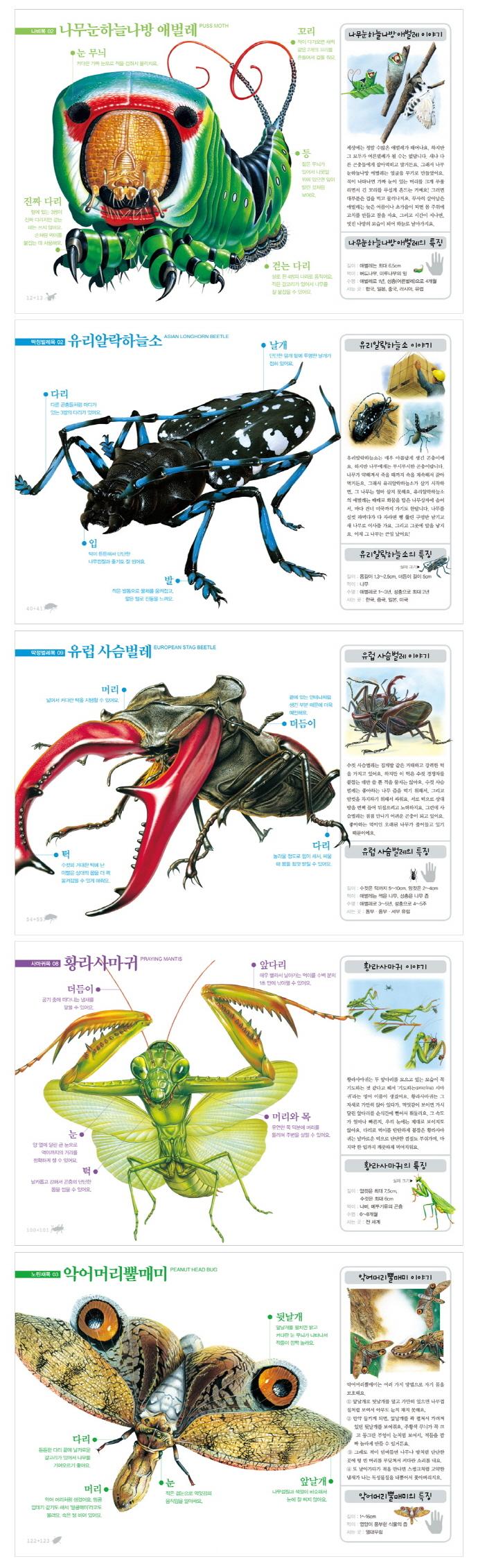 곤충 그림책(진짜 진짜 재밌는)(양장본 HardCover) 도서 상세이미지