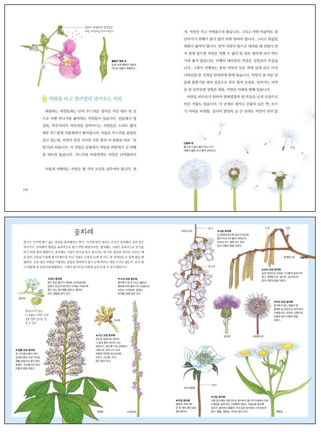 파브르 식물 이야기. 2(사계절 아동교양 클래식 04) 도서 상세이미지