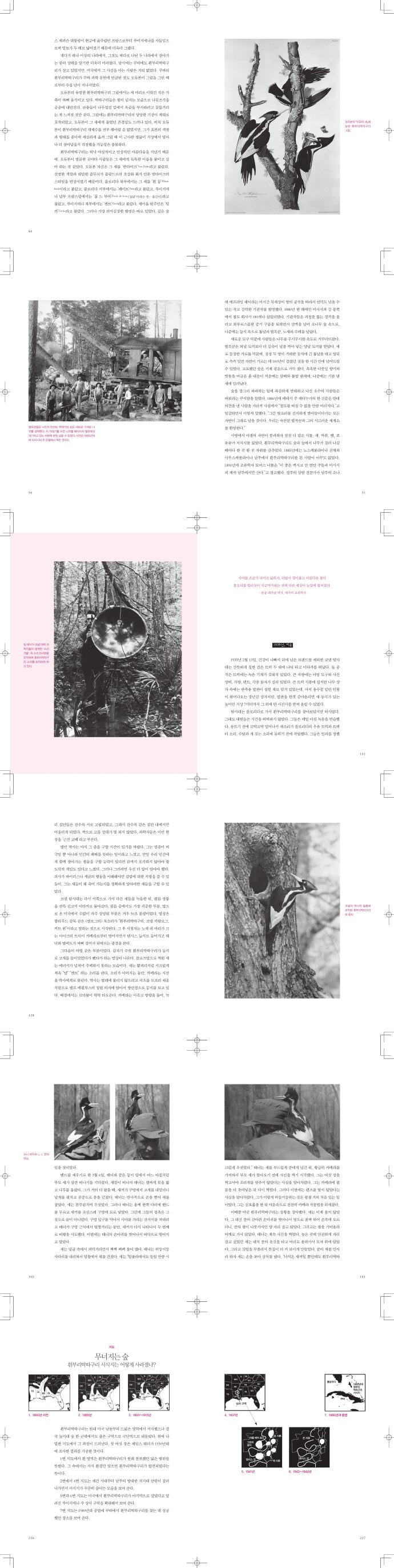 사라진 숲의 왕을 찾아서(생각하는 돌 13) 도서 상세이미지