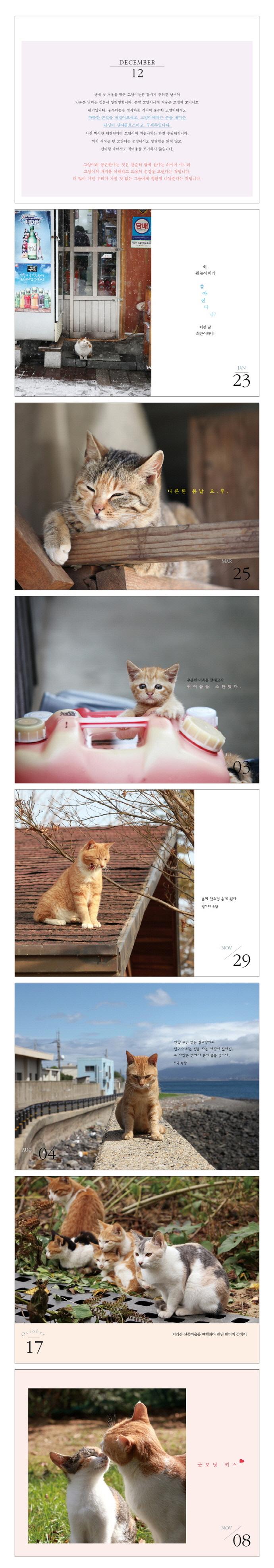 365일 고양이 일력(스프링) 도서 상세이미지