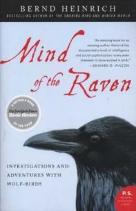 [해외]Mind of the Raven