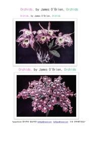 서양난. 난초.Orchids, by James O'Brien