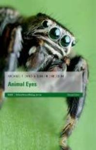 [해외]Animal Eyes