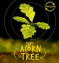 From Acorn to Tree