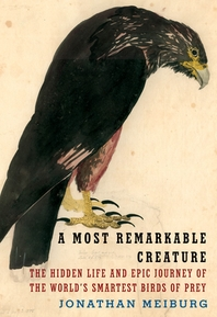 [해외]A Most Remarkable Creature