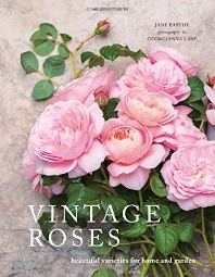 [해외]Vintage Roses