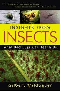 [해외]Insights from Insects (Paperback)