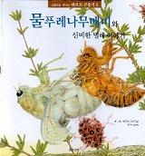 물푸레나무매미와 신비한 벌레 이야기(그림으로 만나는 파브르 곤충기 3)