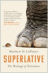 [해외]Superlative