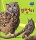 새. 15: 부엉이(세밀화 자연관찰)