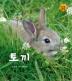 토끼(알기 쉬운 자연관찰 10)(양장본 HardCover)