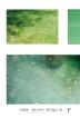꽃나무는 심어놓고 외(종이섬 사진소설 3)