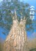 한국의 명품 소나무