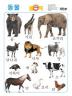 동물 (벽보)