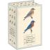 [보유]Sibley Backyard Birding Postcards