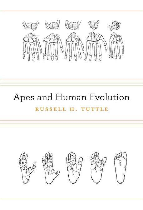 Apes and Human Evolution