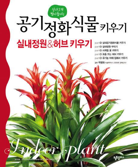 공기정화 식물 키우기