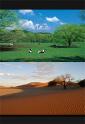 비즈니스Y 농업 혁명편
