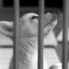 털을 가진 녀석들의 슬픔 – 동물권 보호와 관련된 책