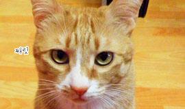 [이벤트]신집사의 '고양이는 해치지 않아요'_#2. 그 많던 멸치를 누가 먹었을까