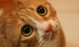 신집사의 '고양이는 해치지 않아요'_#18. 삐졌다옹