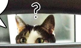 신집사의 '고양이는 해치지 않아요'_#21. 간식박스 개방하라우!